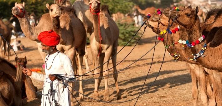 La foire de chevaux et de chameaux de Nagaur en Inde.
