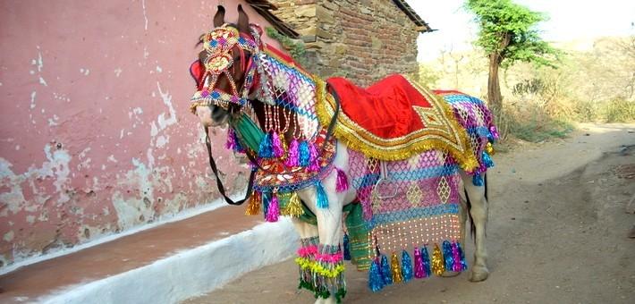 Cheval Marwaris orné de parures pour la foire de Pushkar.
