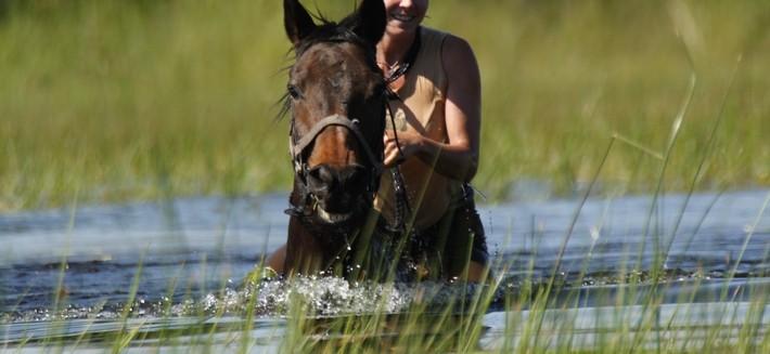 Conseils de sécurité pour nager et se baigner avec son cheval