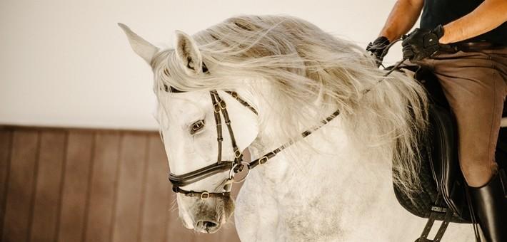 Utilisation du cheval lusitanien