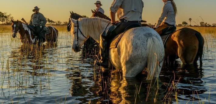 Les bienfaits d'une baignade pour votre cheval et son cavalier