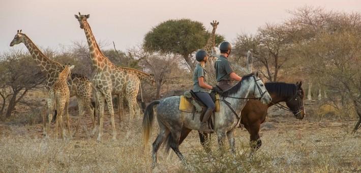 Equipements et accessoires pour une rando à cheval en Afrique et Moyen-Orient