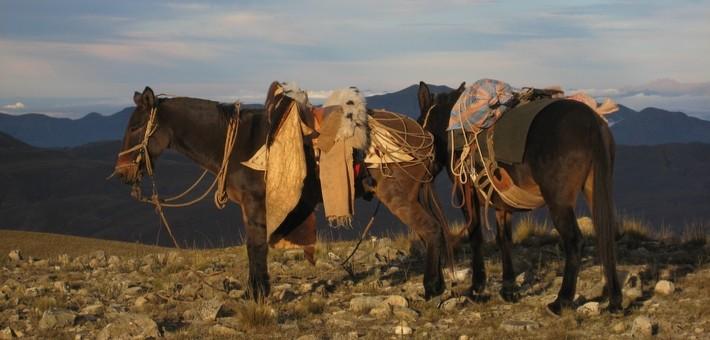 Equipements et accessoires pour une rando à cheval en Amériques