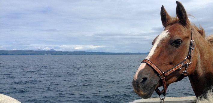 Histoire du cheval canadien : Douze chevaux venus de France