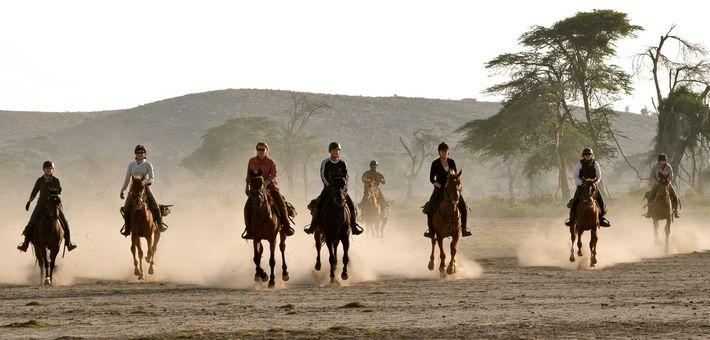 Attribuer en fonction de la personnalité de chaque cheval