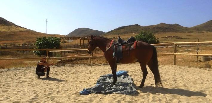 Pourquoi apprendre à lire le comportement de son cheval ?