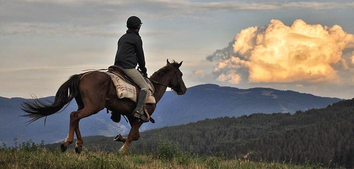 Les chevaux bulgares : le célèbre Karakatchan