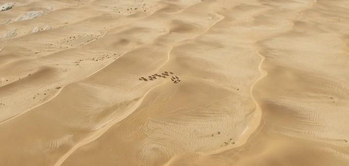 Mode de vie des chevaux de Namibie
