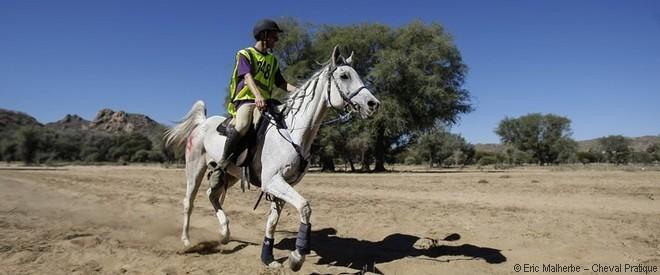 Sellerie et équipement pour l'endurance équestre