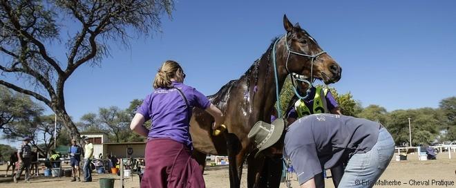 L'assistance au cavalier pendant l'endurance équestre