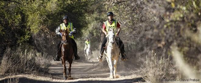Règles et apprentissage de l'endurance équestre