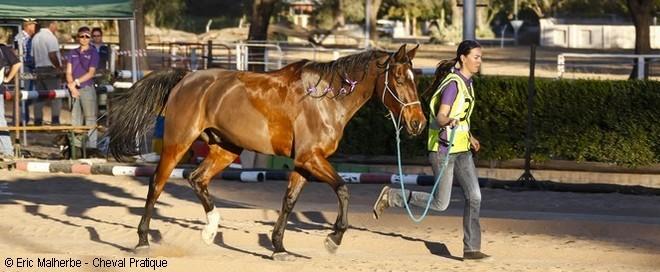 Les contrôles vétérinaires lors d'une course d'endurance équestre
