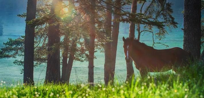 Un autre cheval typique : le Bulgare Oriental