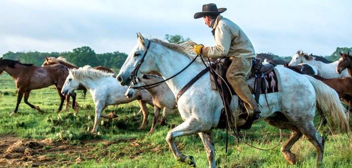 Caractéristiques du cheval Mustang