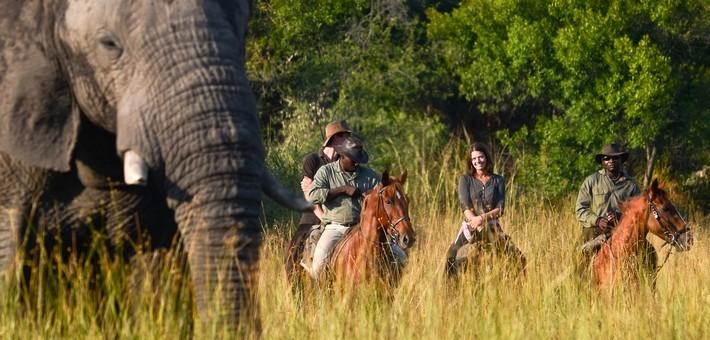 Quels animaux pourrai-je voir lors d'un safari à cheval ?