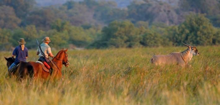 Est-ce qu'un safari à cheval est dangereux ?