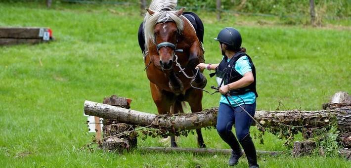 Les règles et les 4 épreuves de TREC en équitation