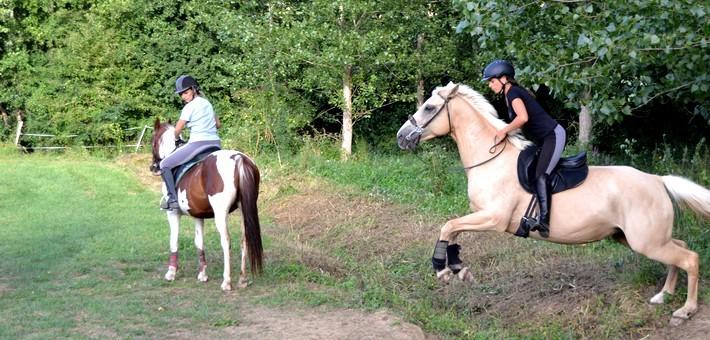Quel cheval et équipements pour le TREC en équitation ?