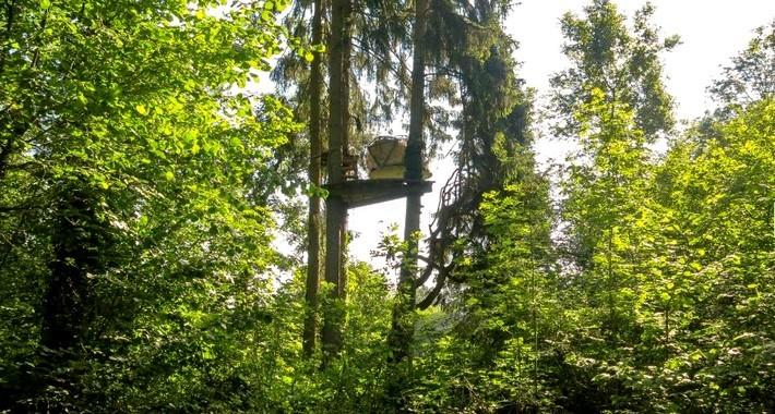 Bulle dans les arbres à Fontainebleau