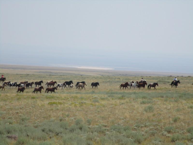 Galop avec le troupeau