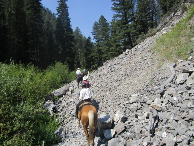 Des chevaux tout-terrains