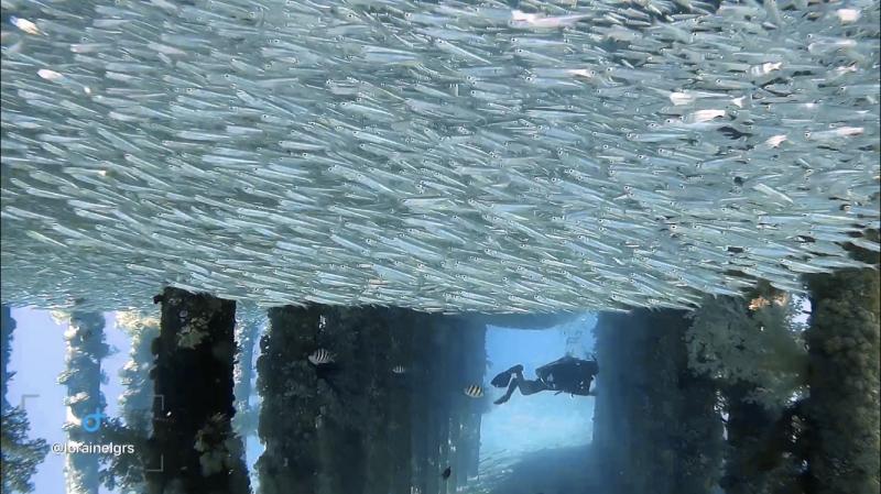 Plongée à Aqaba