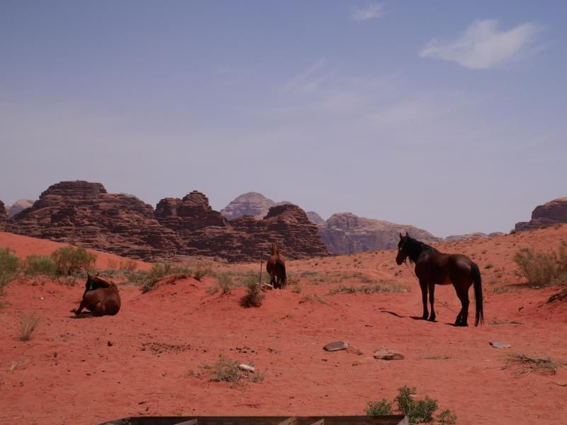 Nos loulous au repos dans le Wadi Rum