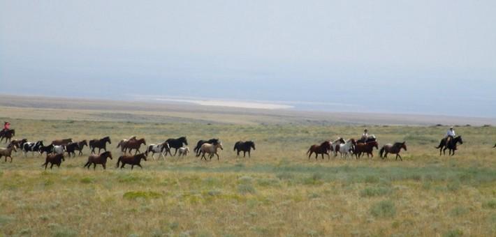 Convoyage de chevaux dans l'Idaho - Caval&go