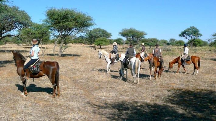 Safari à cheval en Namibie et pur-sang arabes