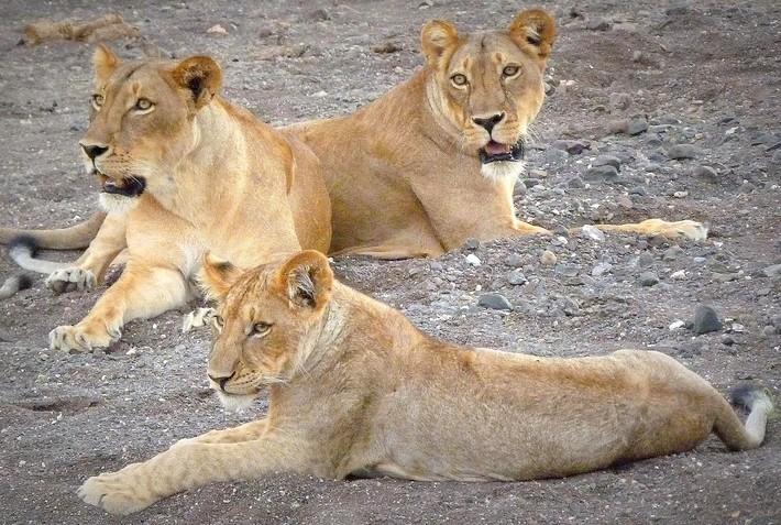 Safari à cheval de l'Afrique du sud au Botswana