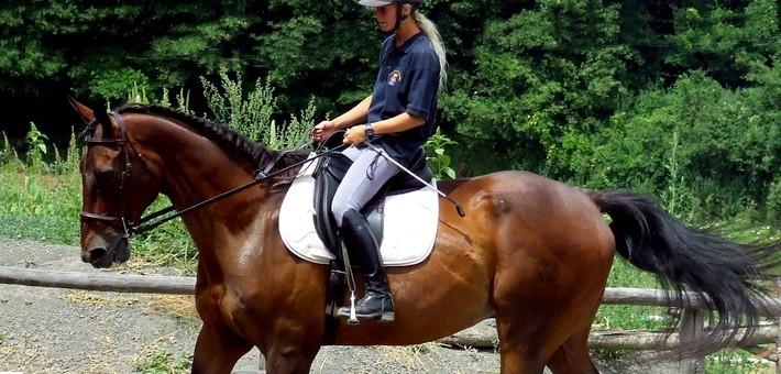 Equitation position