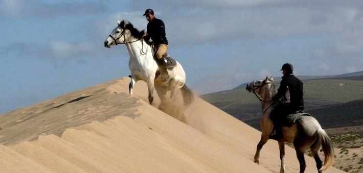 image cheval maroc