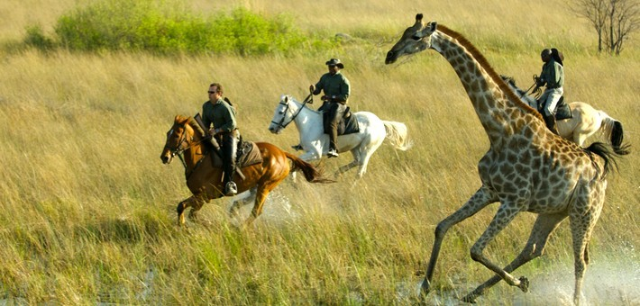 Okavango A Cheval Safari 233 Questre Au Botswana
